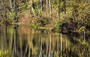Ausable Reflections