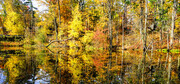 Autumn at the Old Ausable River